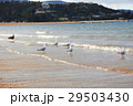 Five black billed gull & shore bird on the beach 29503430