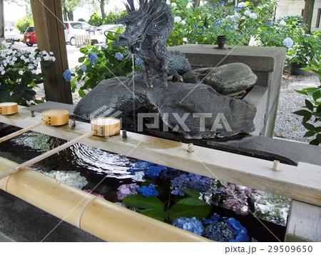 愛知県 一宮市 尾西 御裳神社の紫陽花と手水舎 29509650