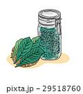 びわ 葉 保存瓶のイラスト 29518760