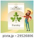 パセリ オランダゼリ 種子のイラスト 29526806
