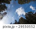 空 森林 林の写真 29550552