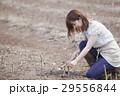 アスパラを収穫する女性 29556844