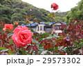 鎌倉文学館のバラ 29573302
