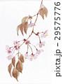 水彩 桜 春のイラスト 29575776