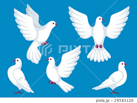 Set of five white doves. Beautiful pigeons faith 29583126