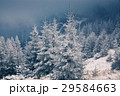 Christmas background with snowy fir trees  29584663