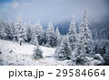 Christmas background with snowy fir trees  29584664