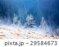 Christmas background with snowy fir trees  29584673