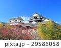早春の松山城と紅梅 29586058