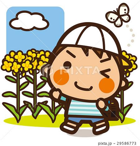 がっこうKids 菜の花男子 29586773