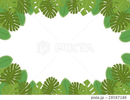南国の植物・葉っぱのフレーム・コピースペース・背景素材 背景透過png・白背景・ベクター 長方形 29587186