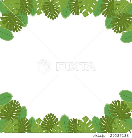 南国の植物・葉っぱのフレーム・コピースペース・背景素材 背景透過png・白背景・ベクター 正方形 29587188