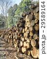 丸太 材木 木材の写真 29589164