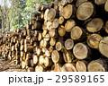 丸太 材木 木材の写真 29589165