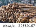 丸太 材木 木材の写真 29589167