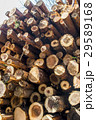 丸太 材木 木材の写真 29589168