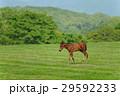 馬 サラブレッド 放牧の写真 29592233