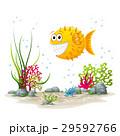水中 海 熱帯のイラスト 29592766