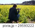 菜の花と男性 29593222