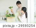 親子 野菜 29593254