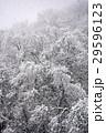 雪景色 29596123