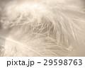 羽 29598763