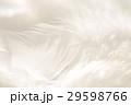 羽 29598766