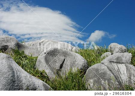 平尾台羊群原 29616304