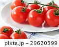 トマト ミニトマト プチトマトの写真 29620399