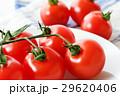 トマト 29620406