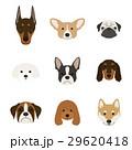 犬の顔セット 29620418
