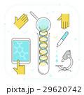 遺伝子 DNA テストのイラスト 29620742