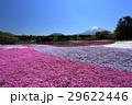 芝桜 富士山 春の写真 29622446
