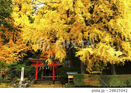 11月 岩戸落葉神社 京都の秋景色 29625042