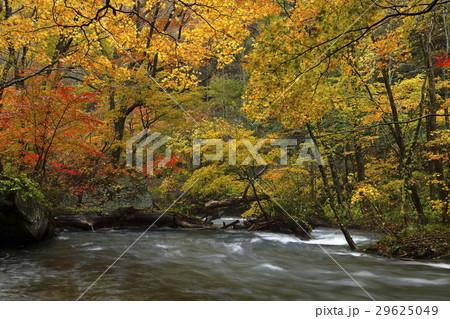 10月 紅葉の奥入瀬渓流 東北の秋  29625049