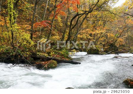 10月 石ヶ戸の瀬-紅葉の奥入瀬渓流- 東北の秋  29625050