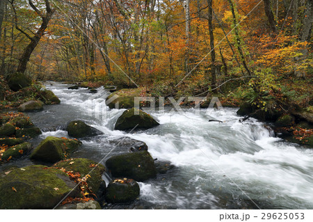 10月 石ヶ戸の瀬-紅葉の奥入瀬渓流- 東北の秋  29625053