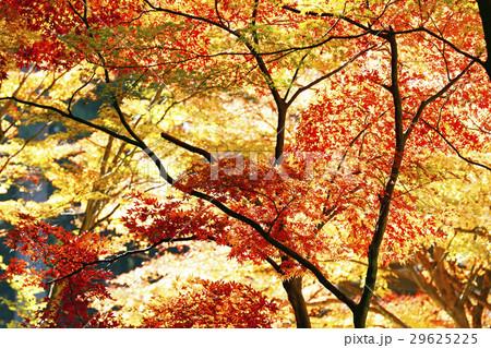11月 紅葉の小国神社 遠江の秋 29625225