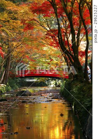 11月 紅葉の小国神社 遠江の秋 29625227
