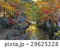 11月 紅葉の小国神社 遠江の秋 29625228