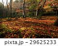 11月紅葉 京都嵯峨野の祇王寺 29625233