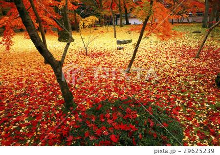11月 紅葉の永観堂 京都の秋景色 29625239