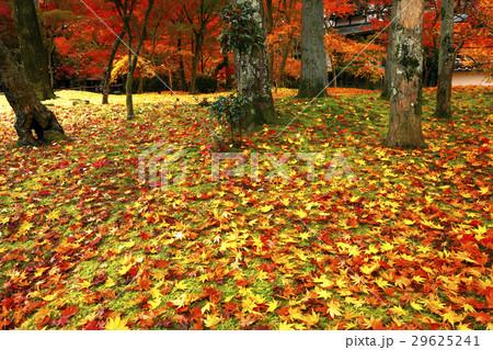11月 紅葉の永観堂 京都の秋景色 29625241