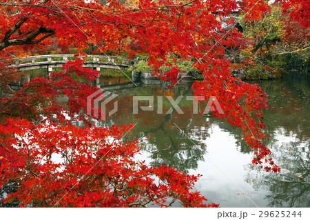 11月 紅葉の永観堂 京都の秋景色 29625244