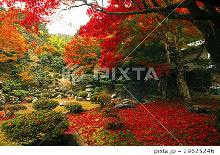 11月 紅葉の徳源院 近江の秋景色 29625246