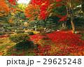 11月 紅葉の徳源院 近江の秋景色 29625248