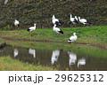 12月 冬のコウノトリの郷公園 29625312