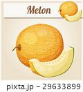 Melon. Cartoon vector icon 29633899