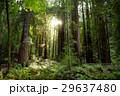 森林 林 森の写真 29637480