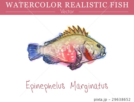 Hand painted watercolor edible fish. Vector design 29638652